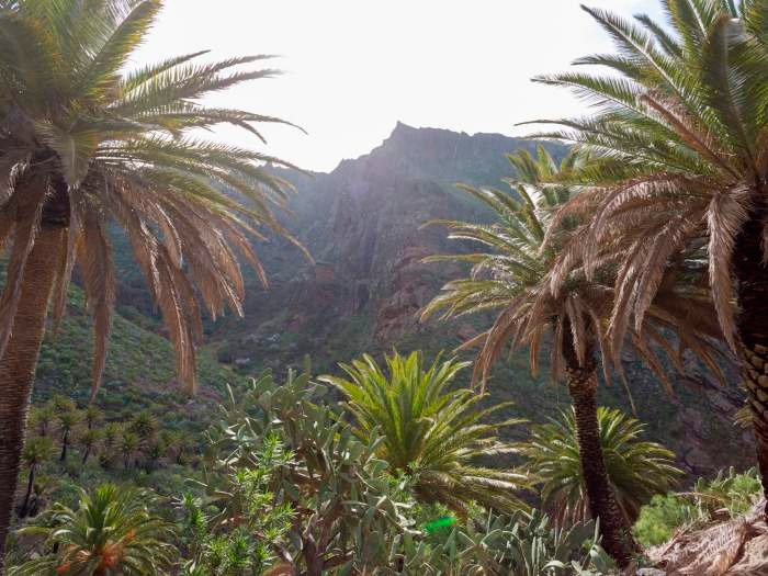 Maison de vacances im Dorf Masca - F7110 (2455925), Masca, Ténérife, Iles Canaries, Espagne, image 22