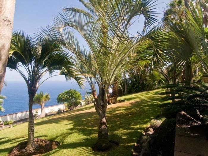 Maison de vacances mit Pool & Terrasse - F7641 (2606546), El Sauzal, Ténérife, Iles Canaries, Espagne, image 23